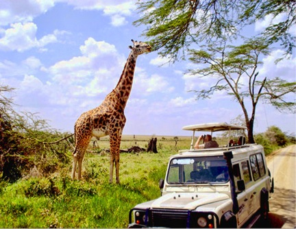 Tourists watching a giraffe feed