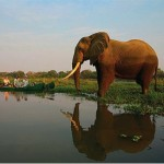 Canoe Travelers meet elephant