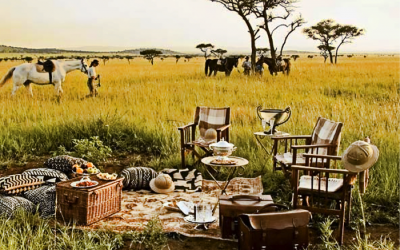luxury african safari picnic