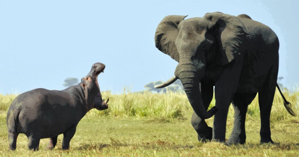 PTBlog17Elephant-Hippo