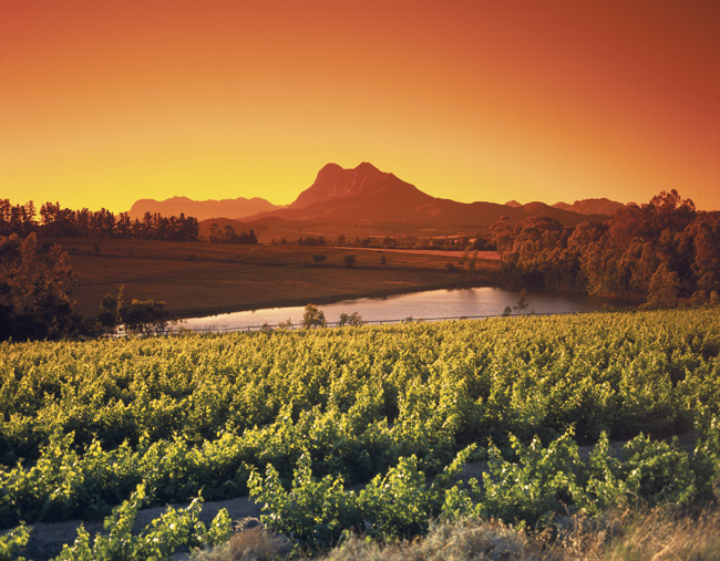 SA-Winelands-iStock_000004135188_Medium-c