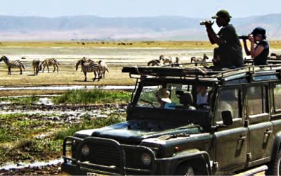 african wildlife watching dos donts