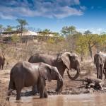 Elephants playing on riverbank