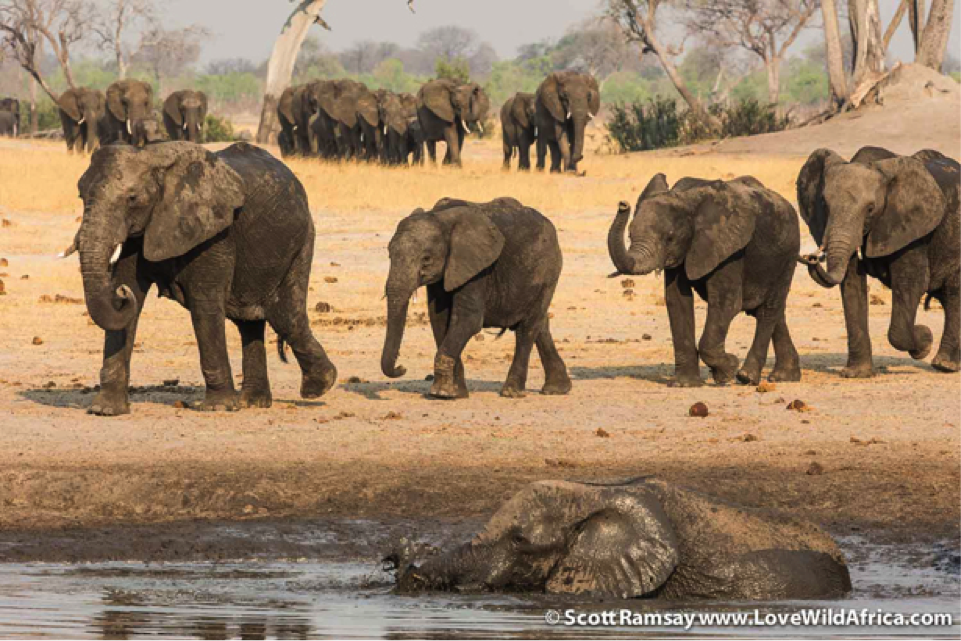 According to Lewis, Hwange is the best place in Africa to see elephants, after Chobe National Park. You can see why!