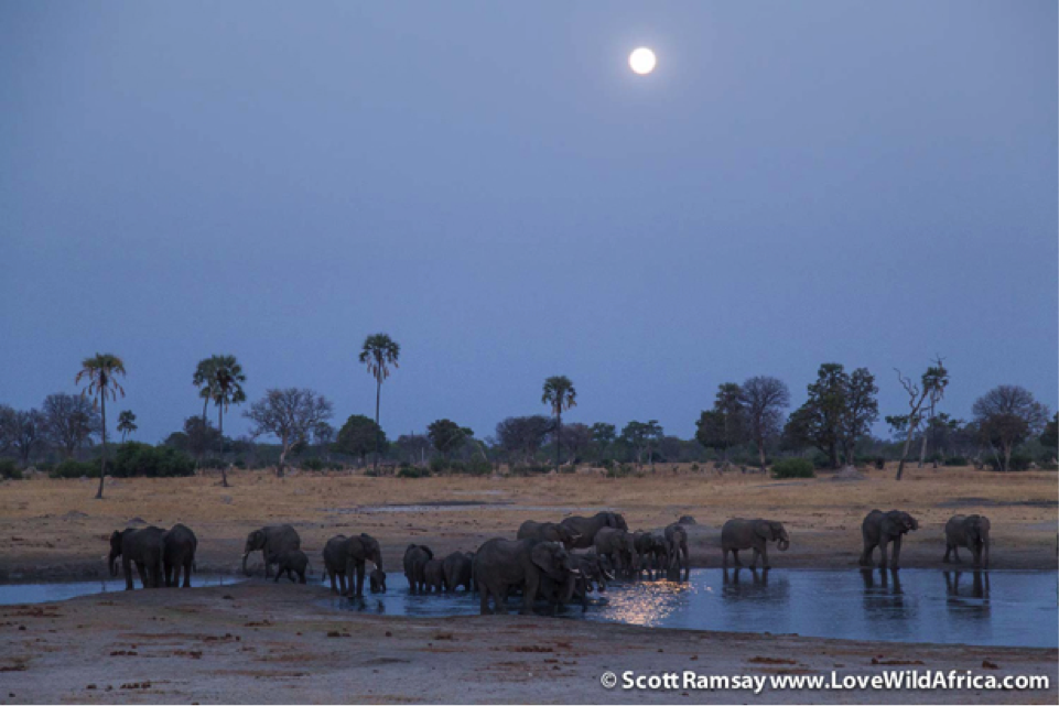 Watching the full moon rise over Hwange, as elephant herds drink from the pan must rate as one of the finest experiences in Africa
