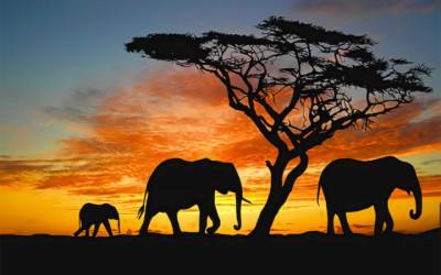 safari planning in advance