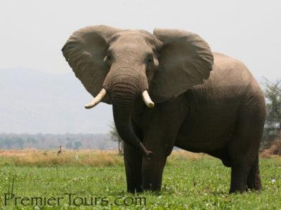 elephant in Zimbabwe's unspoiled wilderness