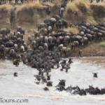 African Great Migration Frequently Asked Questions