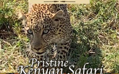 Pristine Kenyan Safari