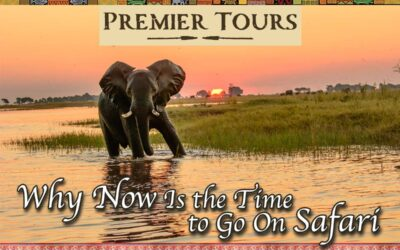 Now is the time to go on Safari